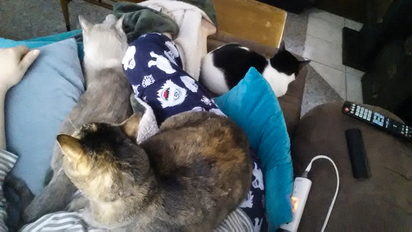 THREE Kitties at once! (THREE!!!)