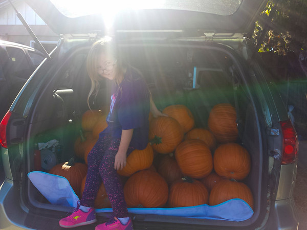 Unloadign the pumpkinmobile (the rest ofthe pallet was in the trunk of my Civic)(Tiniest Pumpkin Conga Line)