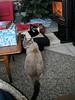 Three little kitties, all in a row