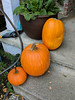 The Pumpkin Fairy has made a delivery to our porch (and the Pumpkin Fairy is a class act; she sends photo notification of delivery!  (Kati Pic)