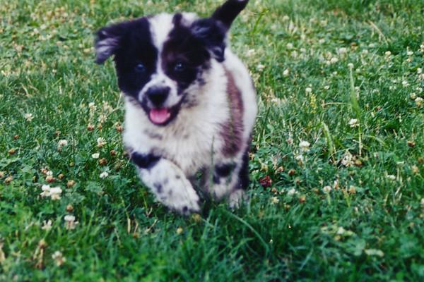 Tucker Dog