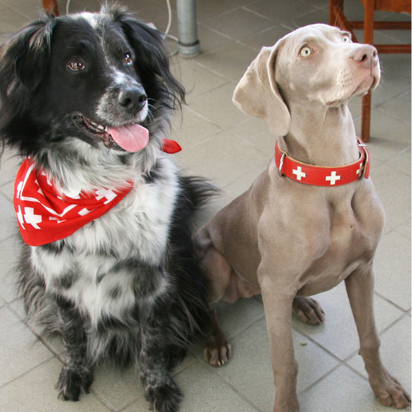 SWISS dogs!