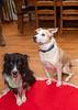 Goochland Pet lovers by Sigafoos-6047