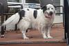 Goochland Pet lovers by Sigafoos-6323