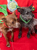 Goochland Pet lovers by Sigafoos-6146