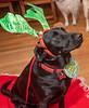 Goochland Pet lovers by Sigafoos-6095