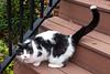 Goochland Pet lovers by Sigafoos-6342