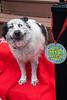 Goochland Pet lovers by Sigafoos-6251
