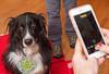 Goochland Pet lovers by Sigafoos-6040