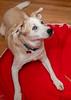 Goochland Pet lovers by Sigafoos-6058