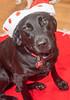 Goochland Pet lovers by Sigafoos-6086