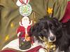Goochland Pet lovers by Sigafoos-6187