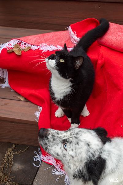 Goochland Pet lovers by Sigafoos-6308