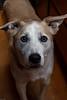 Goochland Pet lovers by Sigafoos-6568