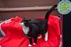 Goochland Pet lovers by Sigafoos-6261