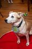 Goochland Pet lovers by Sigafoos-6069