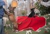 Goochland Pet lovers by Sigafoos-6116