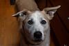 Goochland Pet lovers by Sigafoos-6569