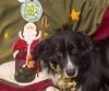 Goochland Pet lovers by Sigafoos-6188