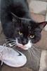 Goochland Pet lovers by Sigafoos-6349