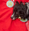 Goochland Pet lovers by Sigafoos-6159