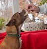 Goochland Pet lovers by Sigafoos-6115