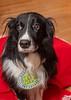 Goochland Pet lovers by Sigafoos-6042