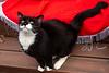 Goochland Pet lovers by Sigafoos-6293