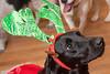 Goochland Pet lovers by Sigafoos-6090