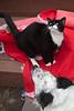 Goochland Pet lovers by Sigafoos-6303
