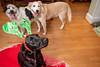 Goochland Pet lovers by Sigafoos-6089