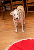 Goochland Pet lovers by Sigafoos-6043