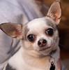 Goochland Pet lovers by Sigafoos-6037