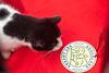 Goochland Pet lovers by Sigafoos-6336
