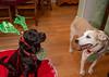 Goochland Pet lovers by Sigafoos-6102