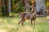 Deer at Pattie's 9-2014-8414