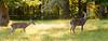 Deer at Pattie's 9-2014-8431