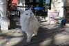 Skunk for Kirsten 4-6-2014-1806