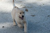 Smyth Pups June 2013-0785