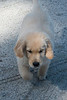 Smyth Pups June 2013-0788