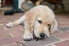 Smyth Pups June 2013-0695