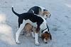 Smyth Pups June 2013-0798