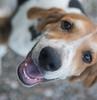 Smyth Pups June 2013-0775