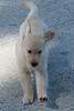 Smyth Pups June 2013-0787