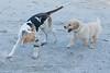 Smyth Pups June 2013-0804