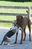 Smyth Pups June 2013-0771