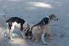 Smyth Pups June 2013-0796