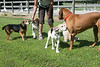 Smyth Pups June 2013-0869