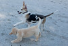 Smyth Pups June 2013-0807