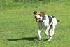 Smyth Pups June 2013-0862